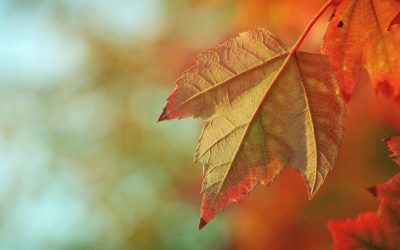 5 Ways to Turn Over a New Leaf This Autumn