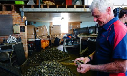 Oyster industry proves resilient by adapting to change