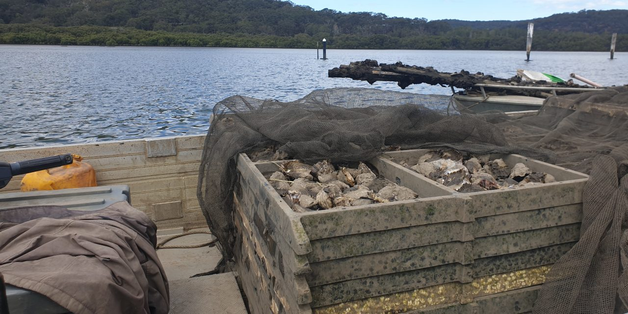 Saltwater sabbatical has oyster farmers demanding better communication from Water NSW