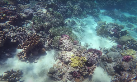 The coral crisis: a joint effort needed to save a priceless ecosystem
