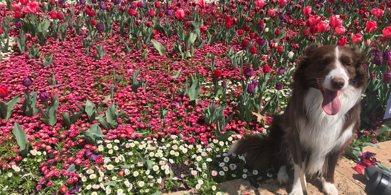 Floriade blossoms despite the pandemic