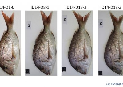 Quality assessment of fish using image and video