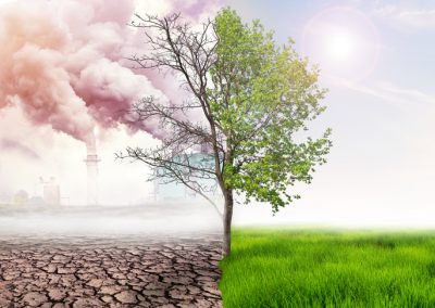 Climate law and carbon markets